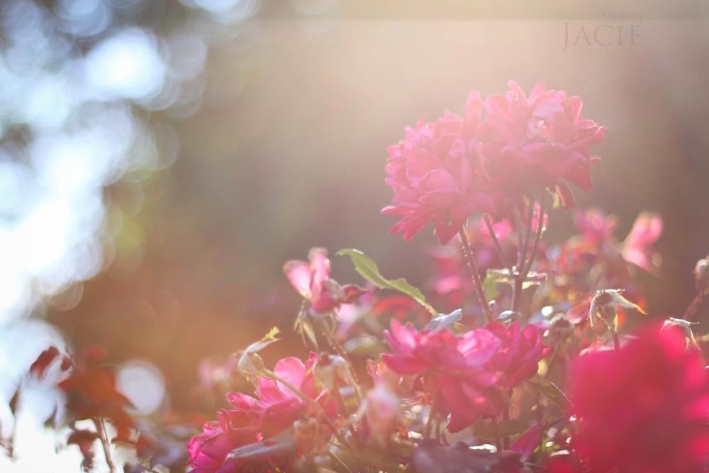 Summer-2013-5249